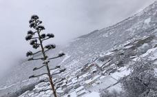 La nieve cubre el interior de Málaga el día de Reyes en la jornada más fría del año