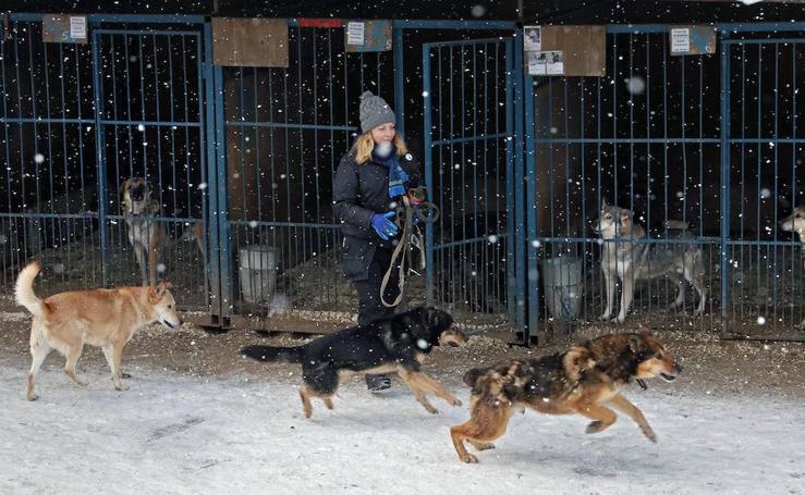 Perros sin hogar de Moscú son cuidados en el refugio Red Pine