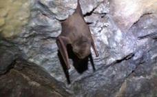 Multan a un colegio de Arriate por tapar una rejilla donde vivía una colonia de murciélagos