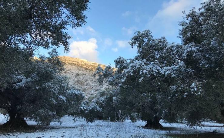 La nieve llega a Alfarnate y Alfarnatejo