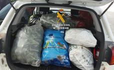 Detienen a catorce personas por el robo de aguacates en la Axarquía