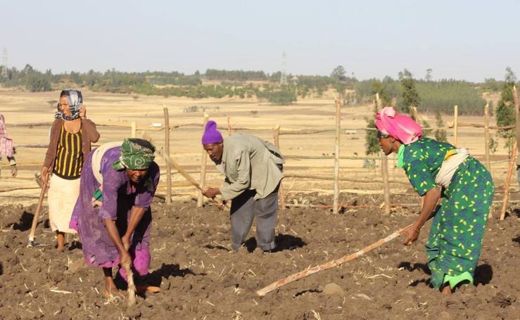 La vida en Etiopía, vista por la Fundación Harena