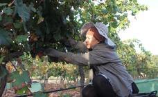 La Ruta del Vino de Ronda espera duplicar sus socios con la ampliación al resto de la provincia