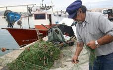 Los pescados y crustáceos más baratos del litoral malagueño