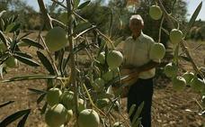 La Junta culmina esta semana el pago de la PAC 2017 a los agricultores malagueños