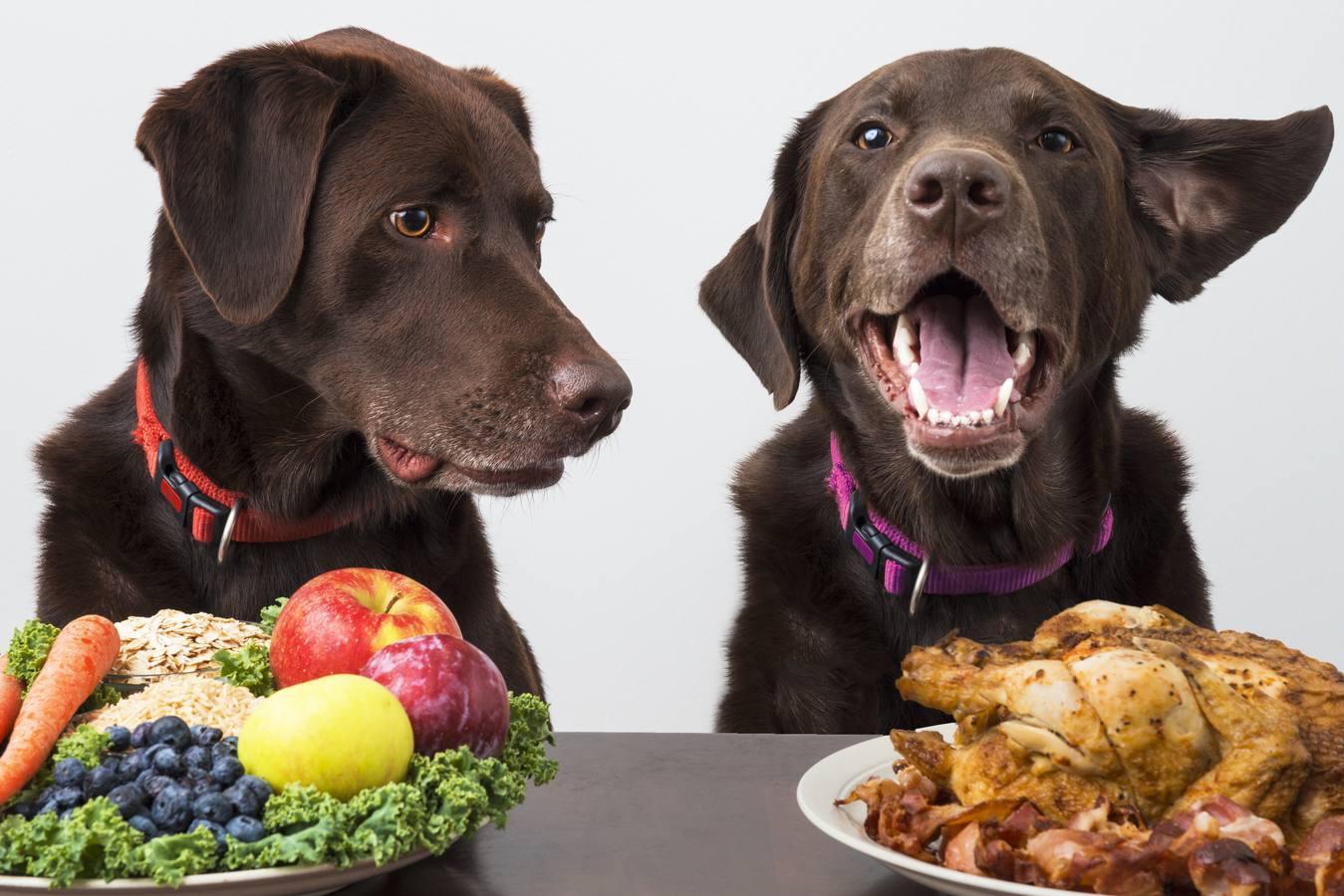 en que les ayuda la zanahoria a los perros
