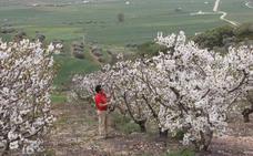El deslumbrante fin de semana del valle de las cerezas de Málaga