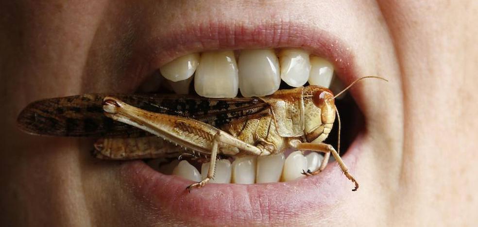 Los insectos que nos comemos, sin saberlo