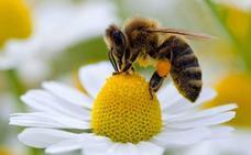 Un matrimonio de Ávila, muy grave tras recibir más de 2.000 picaduras de abeja