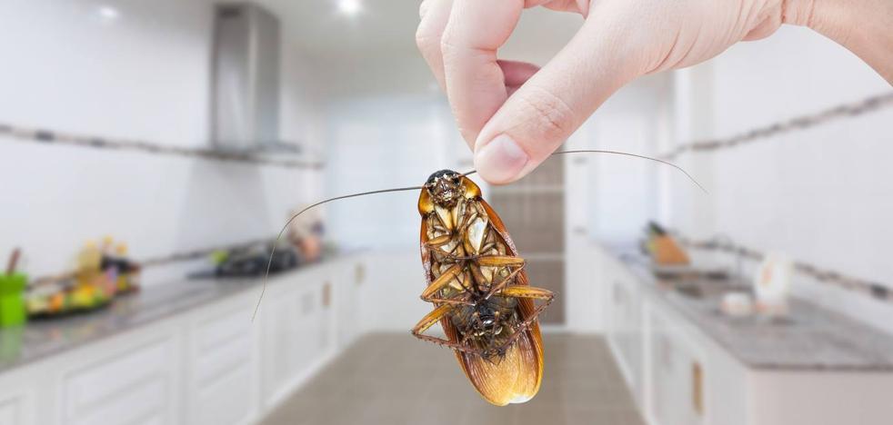 Cómo actuar tras la alerta de plaga de cucarachas: remedios para que no entren en casa
