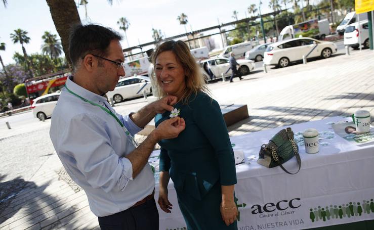 Cuestación de la Asociación del Cáncer en Málaga