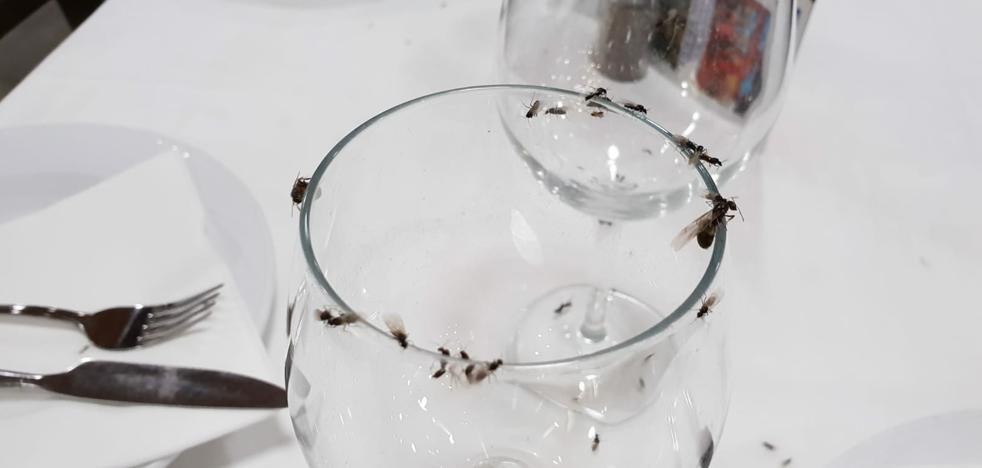 Una plaga de hormigas voladoras invade el paseo marítimo de La Carihuela