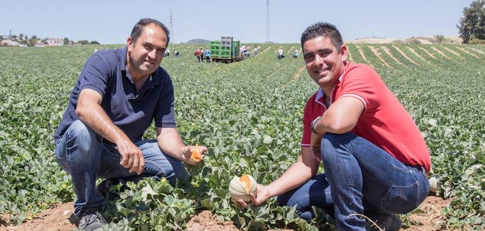 El único productor de melones 'charentais' de Málaga, que contrata a 800 personas durante la recolección