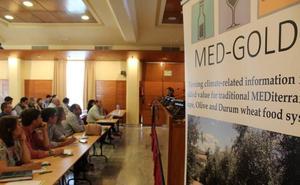 Dcoop participa en un proyecto europeo para diseñar servicios climáticos para el olivar