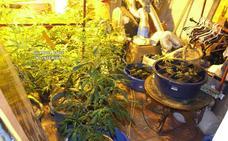 Auxilian en una vivienda de Álora a una mujer por ingesta de pastillas y acaban desmantelado un invernadero de marihuana