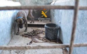 Cuatro personas investigadas por maltrato animal al tener abandonados 40 perros de distintas razas en la Axarquía