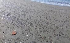 Una enjambre de medusas invade las playas desde Nerja hasta Málaga capital