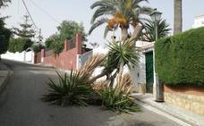 Una yuca de gran tamaño se rompe y cae en plena calle en una urbanización de Vélez sin causar daños