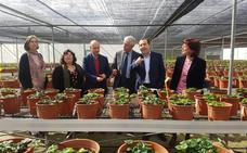 La colección de plantas de fresa más importante de España está en Málaga