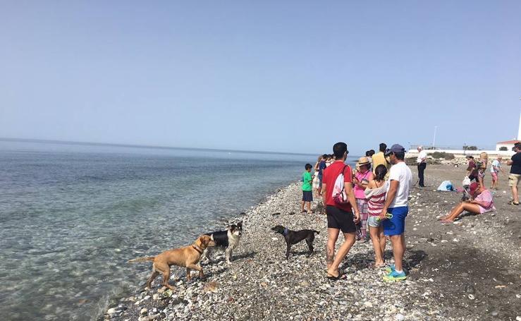 Nueva playa canina en Torrox