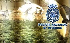 2.500 euros por cultivar marihuana en casa en Málaga