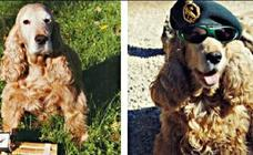 La perros policía y el rumor sobre que se les da droga para que busquen mejor