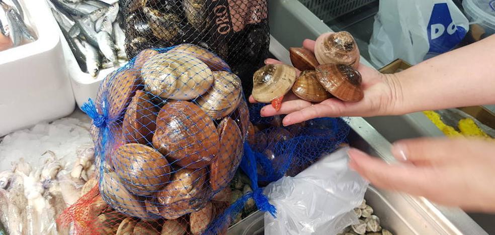 Culpan al saneamiento y la contaminación de la obligación de depurar los moluscos bivalvos del litoral malagueño