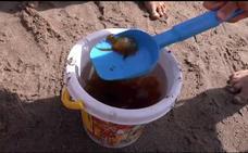 La plaga de medusas continúa en el litoral malagueño este viernes