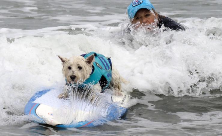 California acoge una nueva edición del Campeonato de Surf para Perros