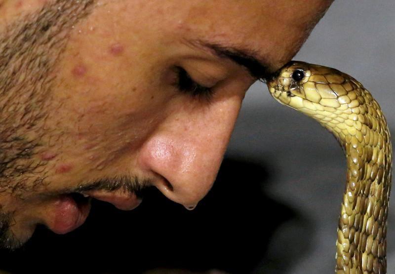 El arte de dormir serpientes