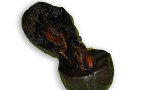 El zapote negro, la fruta tropical con sabor a mousse de chocolate