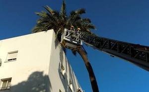 Susto en la Carretera de Cádiz al caer una palmera sobre un edificio