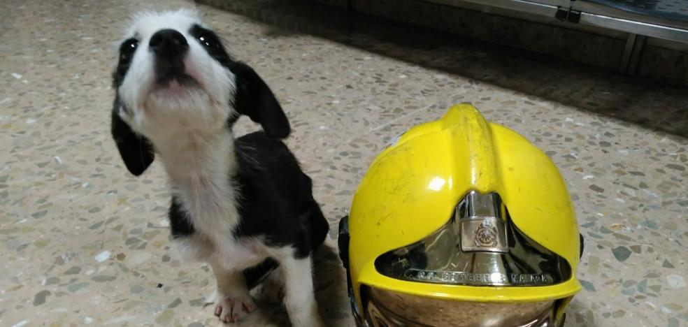Ginebra, la perrita rescatada por los bomberos de un colector de Churriana