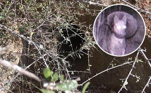 58 días, cámaras nocturnas y una unidad especial para rescatar a una perra en Cártama