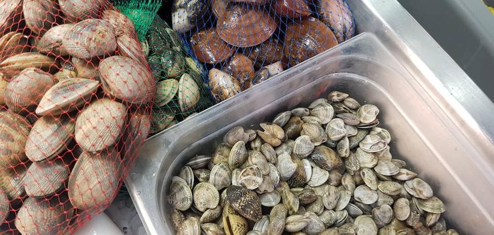 Marisqueros cifran en 400.000 euros las pérdidas por el cierre de los caladeros por toxinas