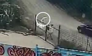 La Guardia Civil busca al hombre que clavó a un perro en la verja de una protectora al intentar lanzarlo por encima de ella