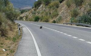 La fauna de la Serranía de Ronda también sufre las altas temperaturas