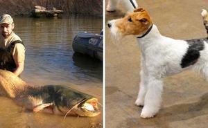 Una mujer afirma que un pez se tragó un fox terrier en el río Tiétar