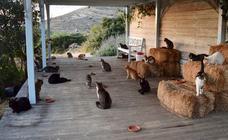 Un santuario felino busca trabajadores para que vivan en una isla paradisíaca con 55 gatos