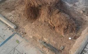 Arroyo de los Ángeles: de árboles y aceras rotas