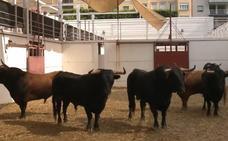 Toros de Guiomar, El Vellosino y La Palmosilla para hoy en Málaga