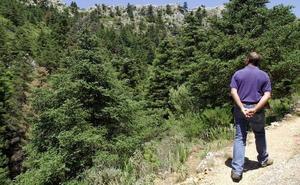 El pinsapo escalará a latitudes más altas para sobrevivir al cambio climático
