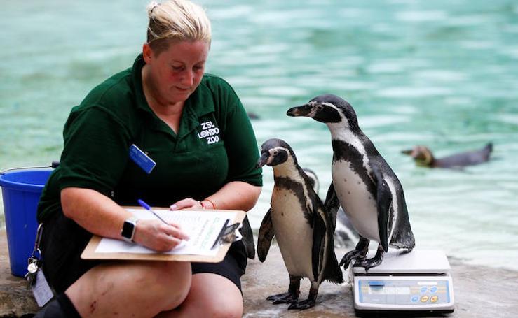 Los habitantes del Zoo de Londres se ponen a dieta