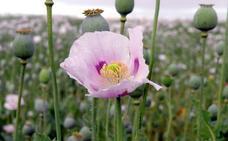 El granero del opio en España