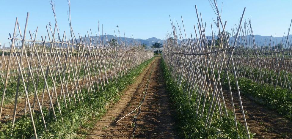 Agricultores del Valle del Guadalhorce piden que los riegos se mantengan en invierno