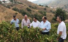 La Junta destina 2,2 millones de euros para ayudar al sector de la uva pasa moscatel hasta 2020