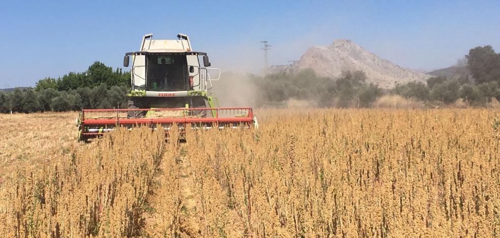 Alsur construirá cuatro nuevos silos para almacenar quinoa