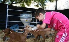 Casabermeja promociona los productos de la Cabra Malagueña en la décima edición de su fiesta