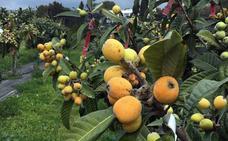 Frutas exóticas que se cultivan en Málaga y dónde comprarlas