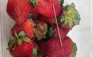 Fresas con agujas: el sabotaje que trae de cabeza al gobierno australiano